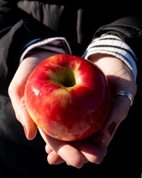 Lutter contre l'insécurité alimentaire : quelles alternatives aux banques de dépannage ?